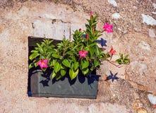 与花的小老房子窗口 意大利村庄 免版税库存图片