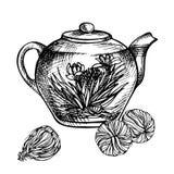与花的开花的绿茶在玻璃茶壶 库存照片