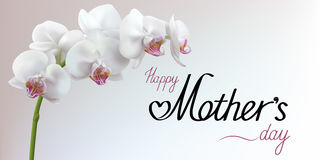 与花的愉快的母亲节问候背景 免版税库存照片