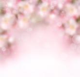 与花的抽象春天背景 免版税库存照片