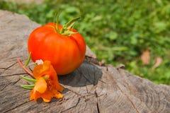 与花的新鲜的有机蕃茄在树桩 库存照片