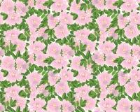 与花的无缝的纹理 库存照片