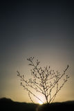 与花的日落 库存照片