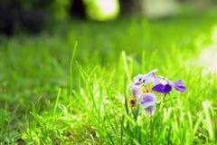 与花的早晨草 免版税库存照片