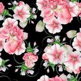 与花的明亮的无缝的样式 罗斯 喇叭花 开花 额嘴装饰飞行例证图象其纸部分燕子水彩 库存图片