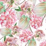 与花的明亮的无缝的样式 罗斯 安祖花 额嘴装饰飞行例证图象其纸部分燕子水彩 免版税库存照片