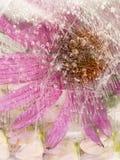 与花的明亮的桃红色抽象 免版税库存照片