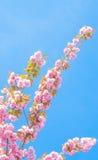 与花的春天树 免版税库存图片
