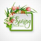 与花的春天框架 也corel凹道例证向量 免版税库存照片
