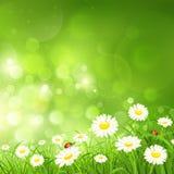 与花的春天背景 免版税库存照片