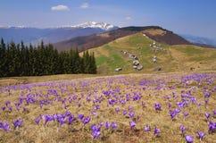 与花的春天风景在山 免版税库存照片