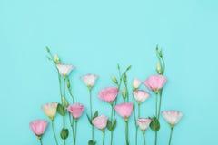 与花的构成在颜色背景 免版税库存照片