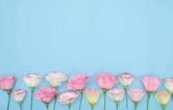 与花的构成在颜色背景 免版税库存图片
