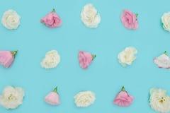 与花的构成在颜色背景 库存照片