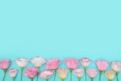与花的构成在颜色背景 库存图片