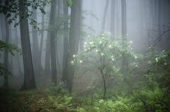 与花的树在绽放在有雾的森林里 免版税库存图片
