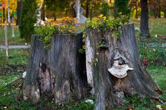 与花的树桩 图库摄影