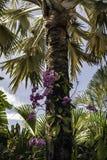 与花的棕榈树,自然场面 库存图片