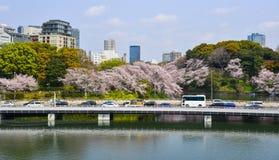 与花的樱桃树在街道上 图库摄影