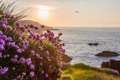 与花的沿海日出在前景 免版税库存照片