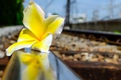 与花的火车轨道 库存图片