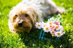 与花的狗在草甸 免版税库存照片