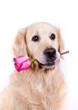 与花的狗 免版税库存图片