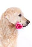 与花的狗 库存照片