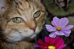 与花的猫 免版税库存照片