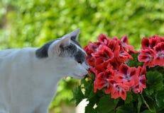 与花的猫 免版税图库摄影