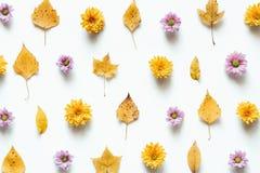 与花的秋天样式和烘干在白色背景的叶子 免版税库存照片