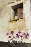 与花的窗口在墙壁上 库存图片
