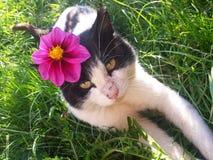 与花的美丽的猫在头 库存图片
