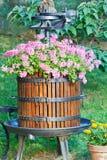 与花的老桶 免版税库存照片