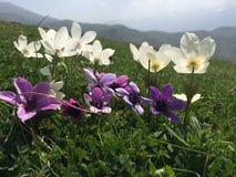与花的自然 库存图片