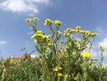 与花的自然 免版税库存照片