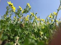 与花的自然 免版税图库摄影