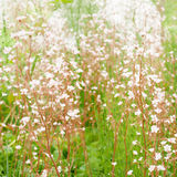 与花的艺术背景 免版税库存照片