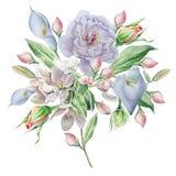 与花的花卉卡片 罗斯 水芋属 开花 额嘴装饰飞行例证图象其纸部分燕子水彩 库存例证