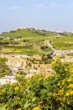与花的被弄脏的戈佐岛视图在马耳他 库存图片