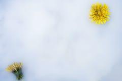 与花的装饰乳状白色背景 库存照片