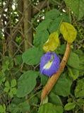 与花的豆 免版税库存照片