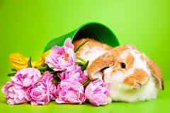 与花的逗人喜爱的兔子在绿色背景 免版税图库摄影