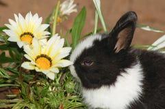 与花的逗人喜爱的小兔 免版税库存图片