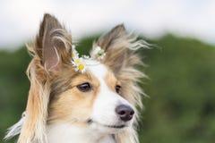 与花的逗人喜爱的狗在头发 免版税库存图片