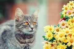 与花的逗人喜爱的猫 免版税库存图片