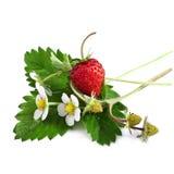 与花的野草莓 免版税库存图片