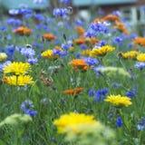 与花的领域 库存图片