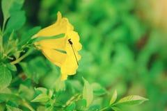 与花的蜻蜓 免版税库存照片