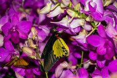 与花的蝴蝶 免版税库存照片